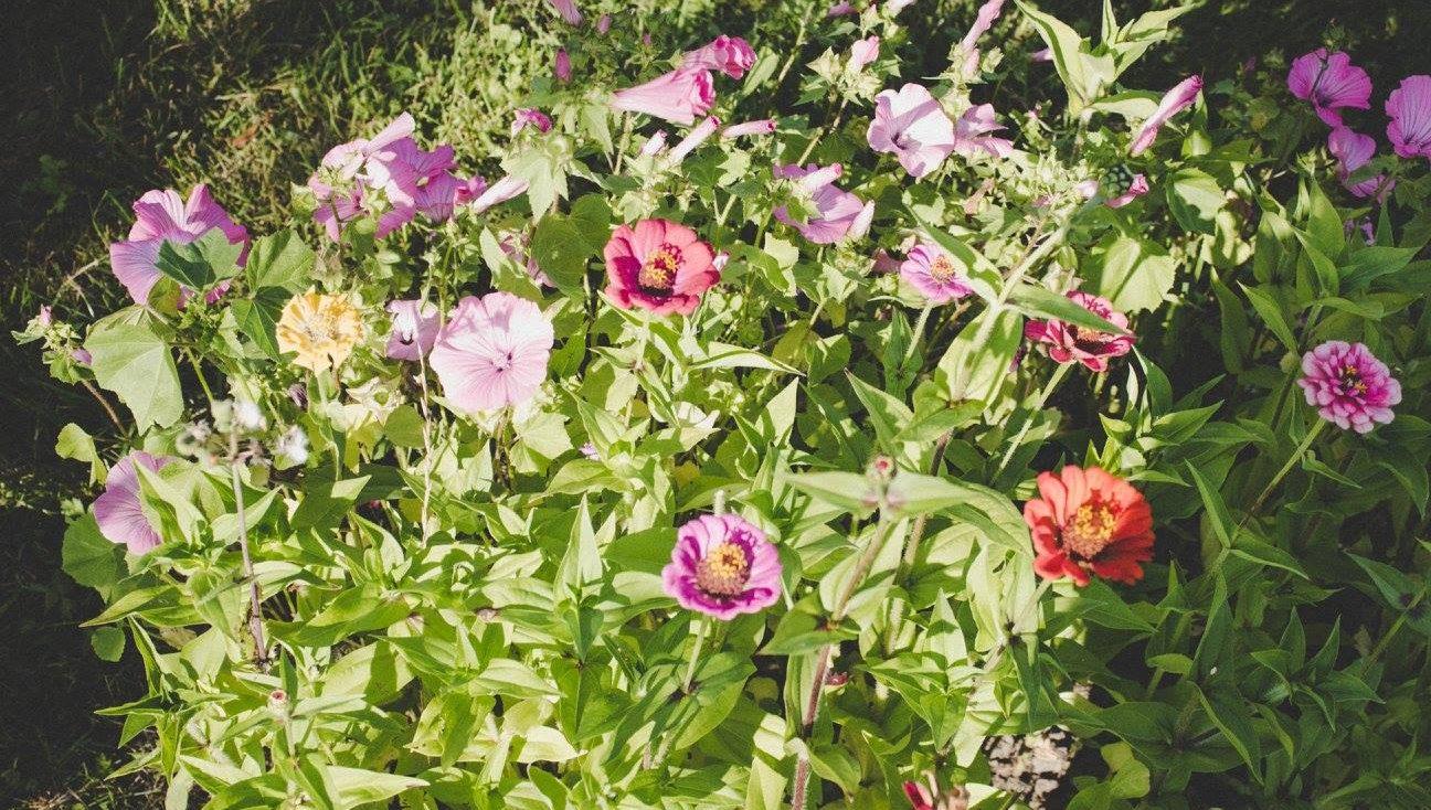 Stellys Garden